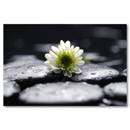 Αφίσα (μαύρο, λευκό, άσπρο, βότσαλα, βράχια, λουλούδι)
